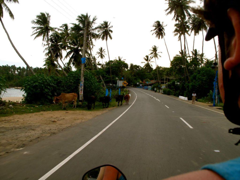 motorbiking-in-sri-lanka-3