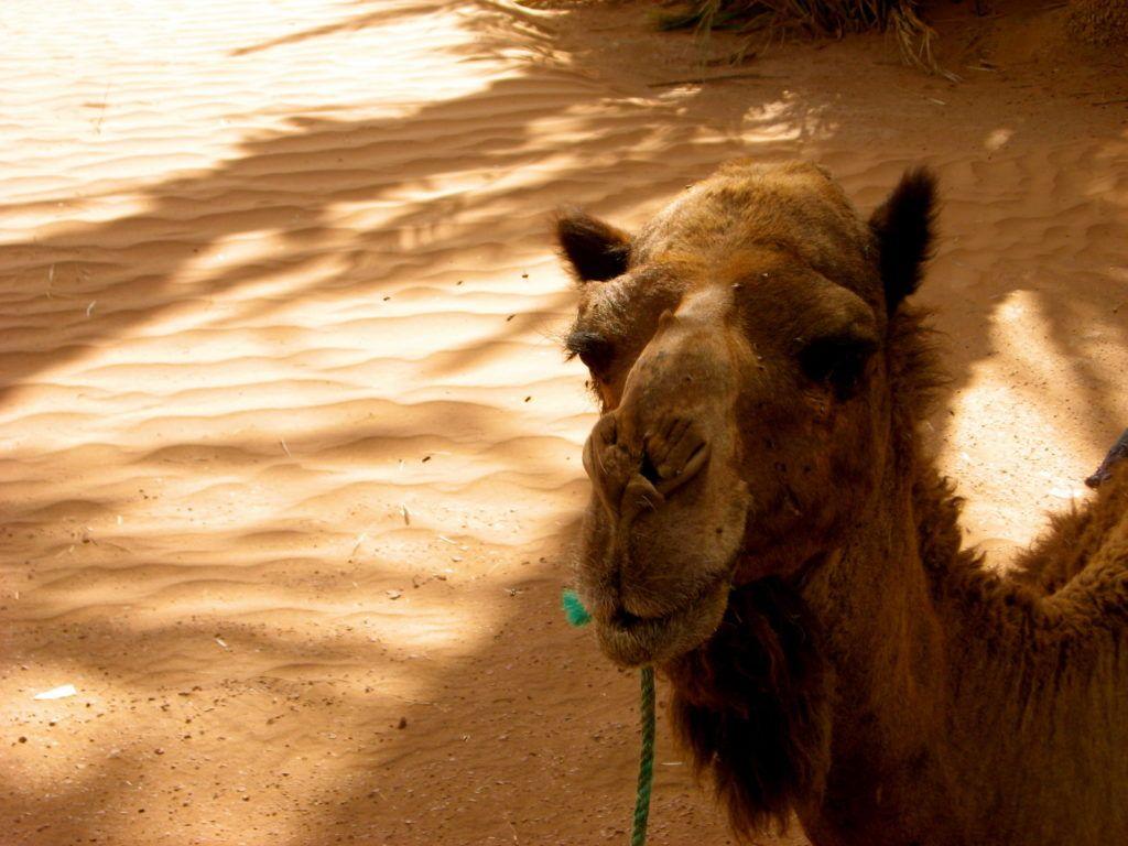 sahara-desert-morocco-1