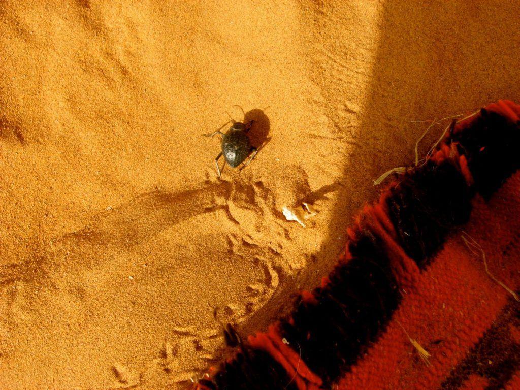 sahara-desert-morocco-5