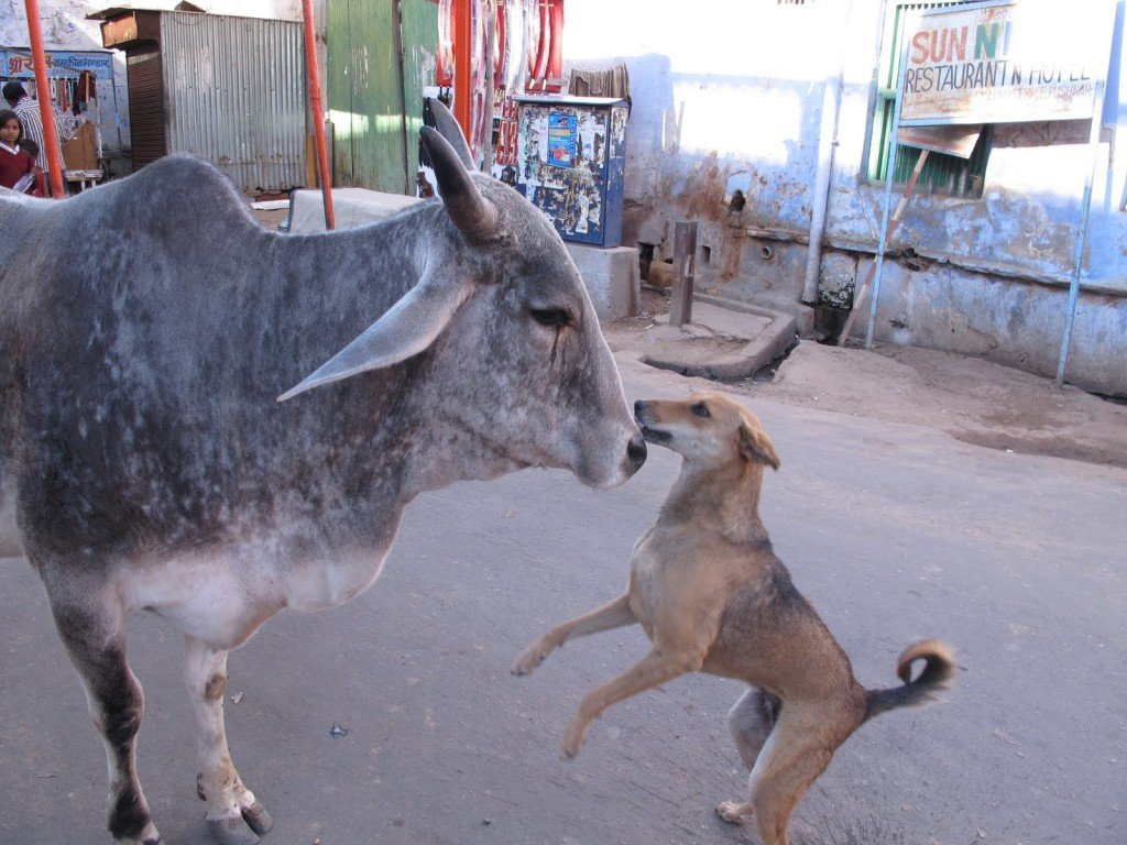 Pushkar India 5