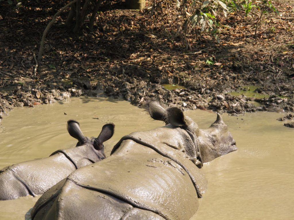 chitwan-national-park-4