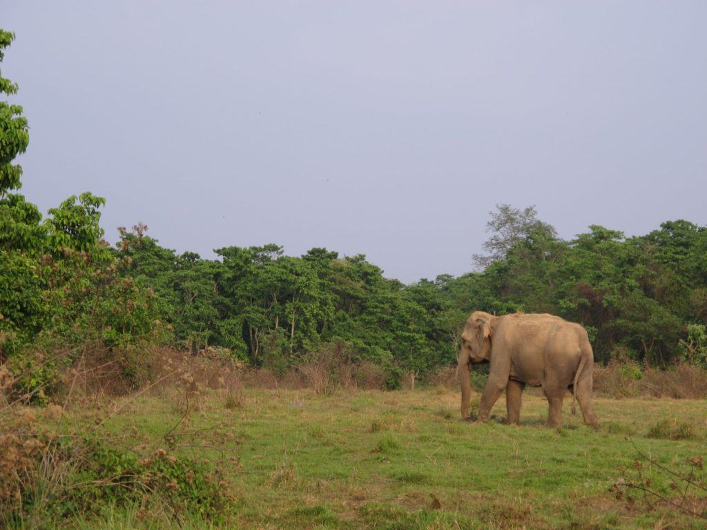chitwan-national-park-5