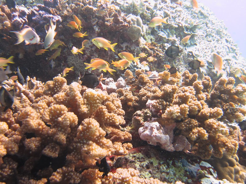 Diving in Indonesia 3