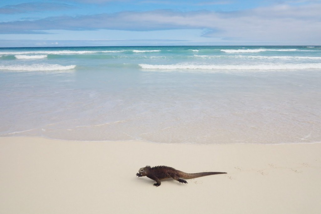 Animals of the Galapagos 1