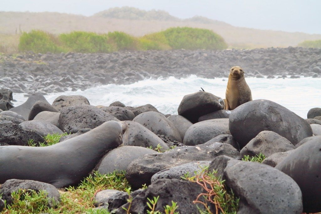 Animals of the Galapagos 3