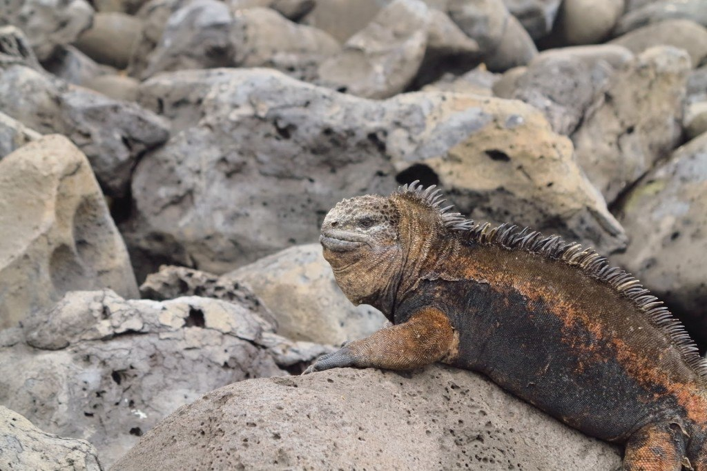 Animals of the Galapagos 5