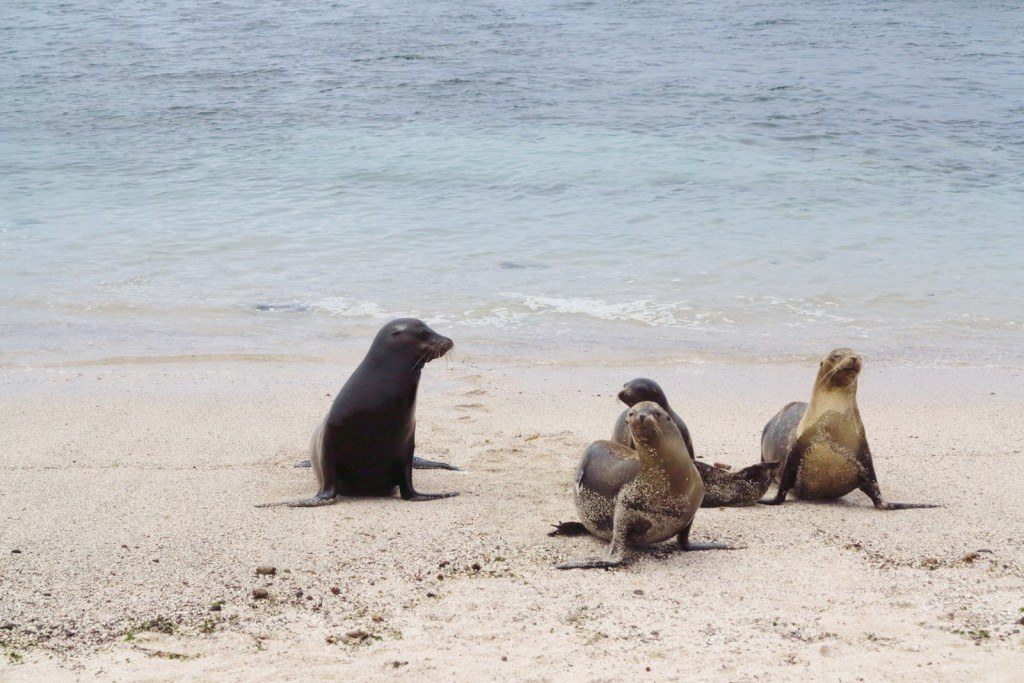 Animals of the Galapagos 7
