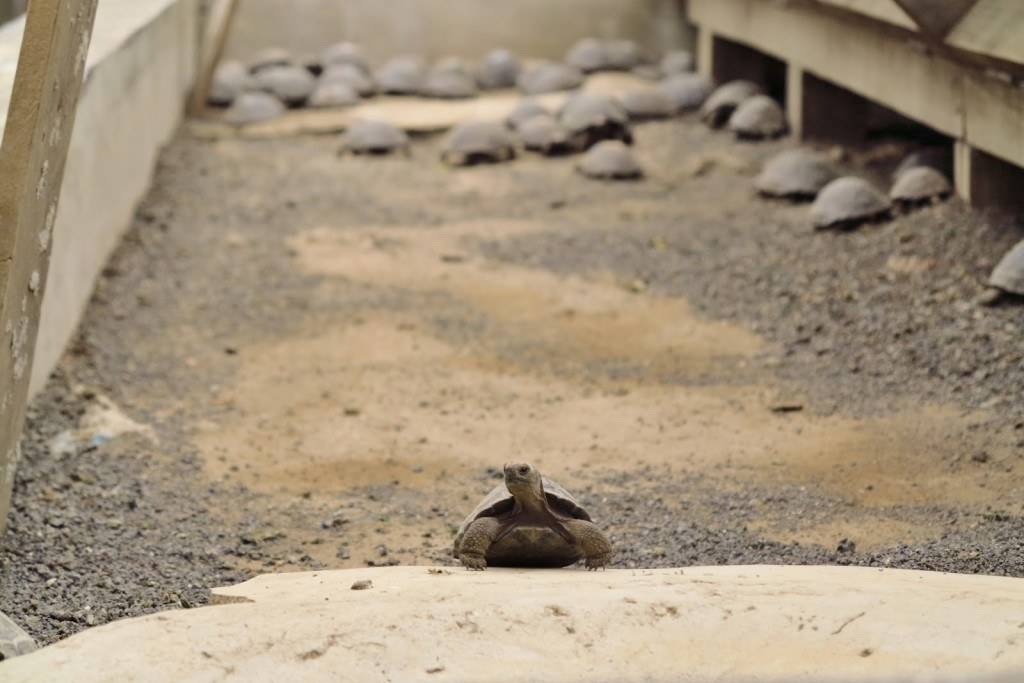 Animals of the Galapagos 8