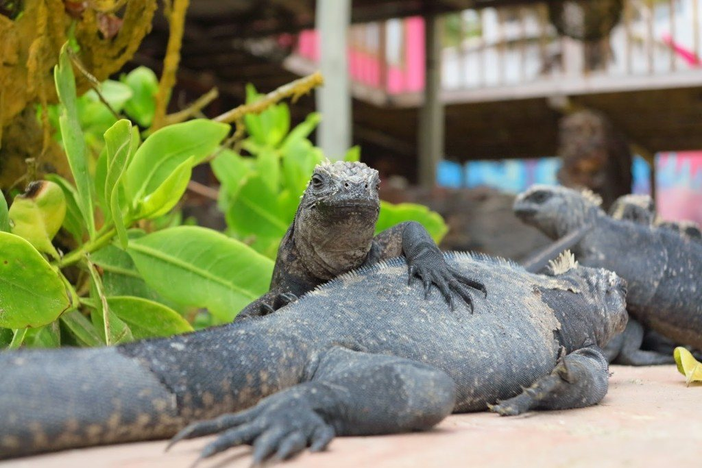 Animals of the Galapagos 9
