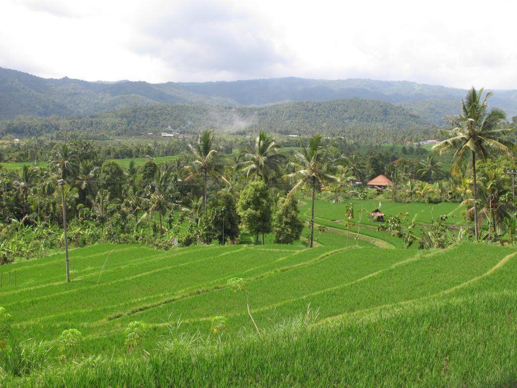 lovina-indonesia-12