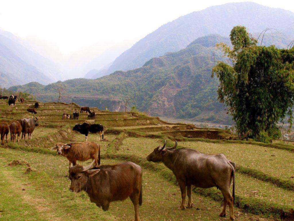 hiking-in-nepal