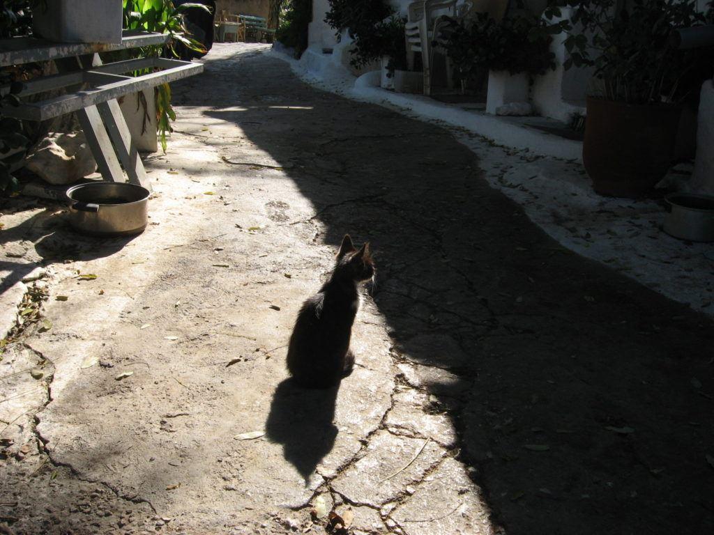 athens-cat