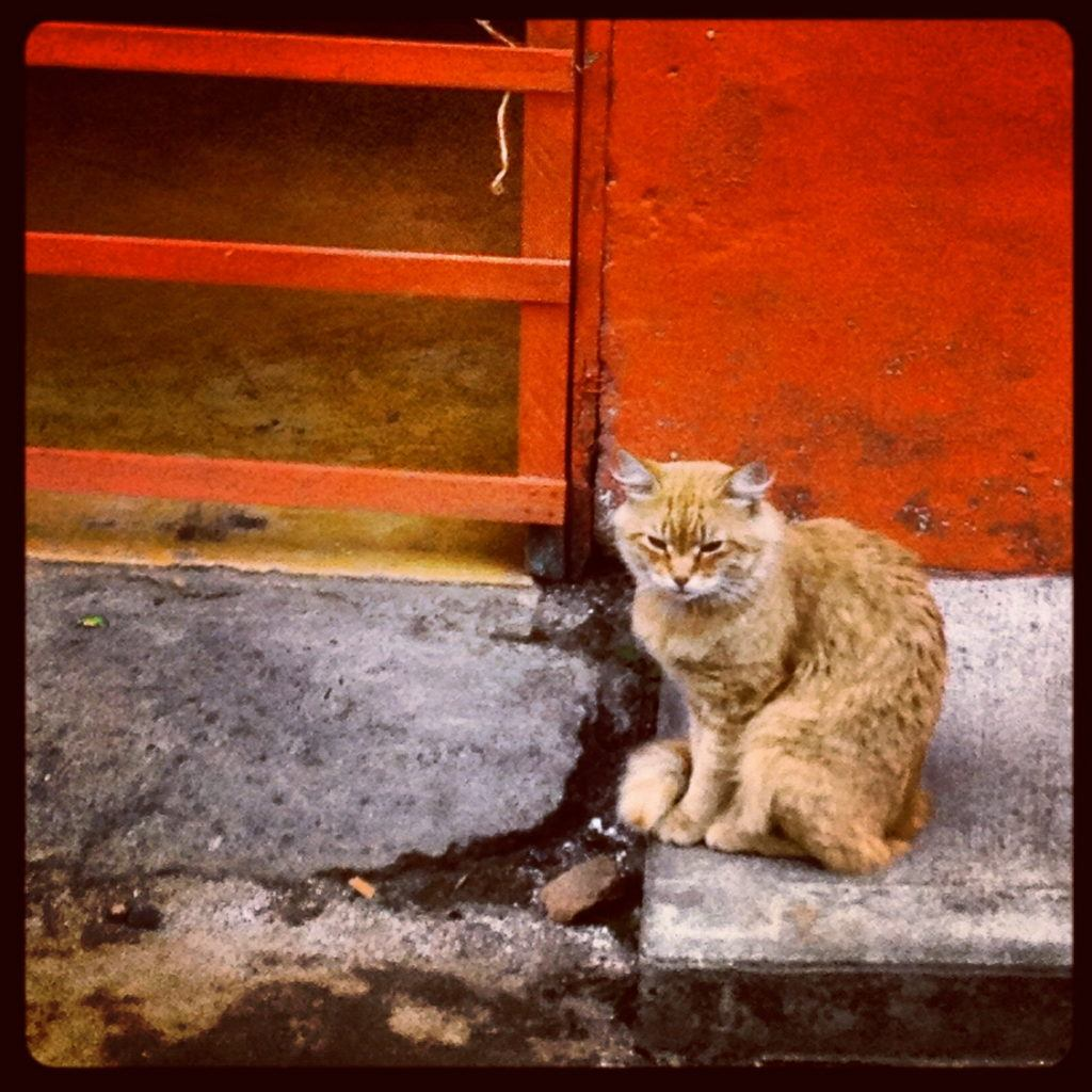 salento-cat