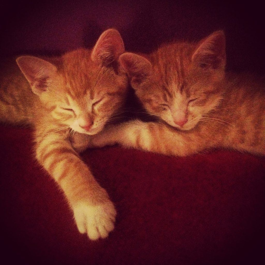 winnipeg-cats