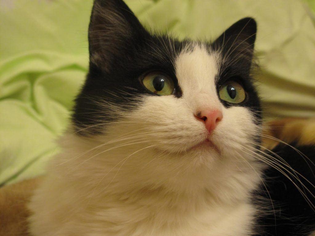 yekaterinburg-cat