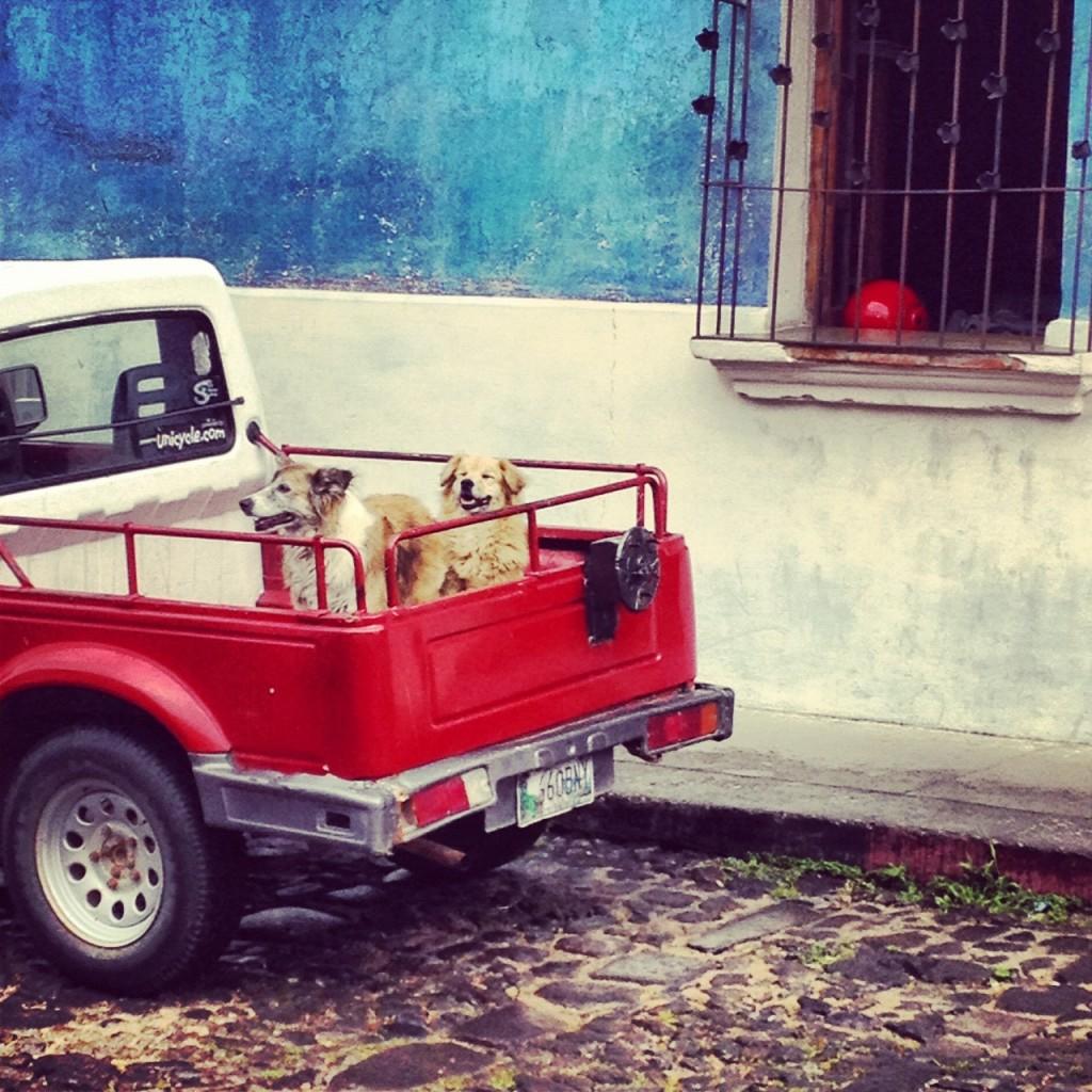 Antigua Dogs
