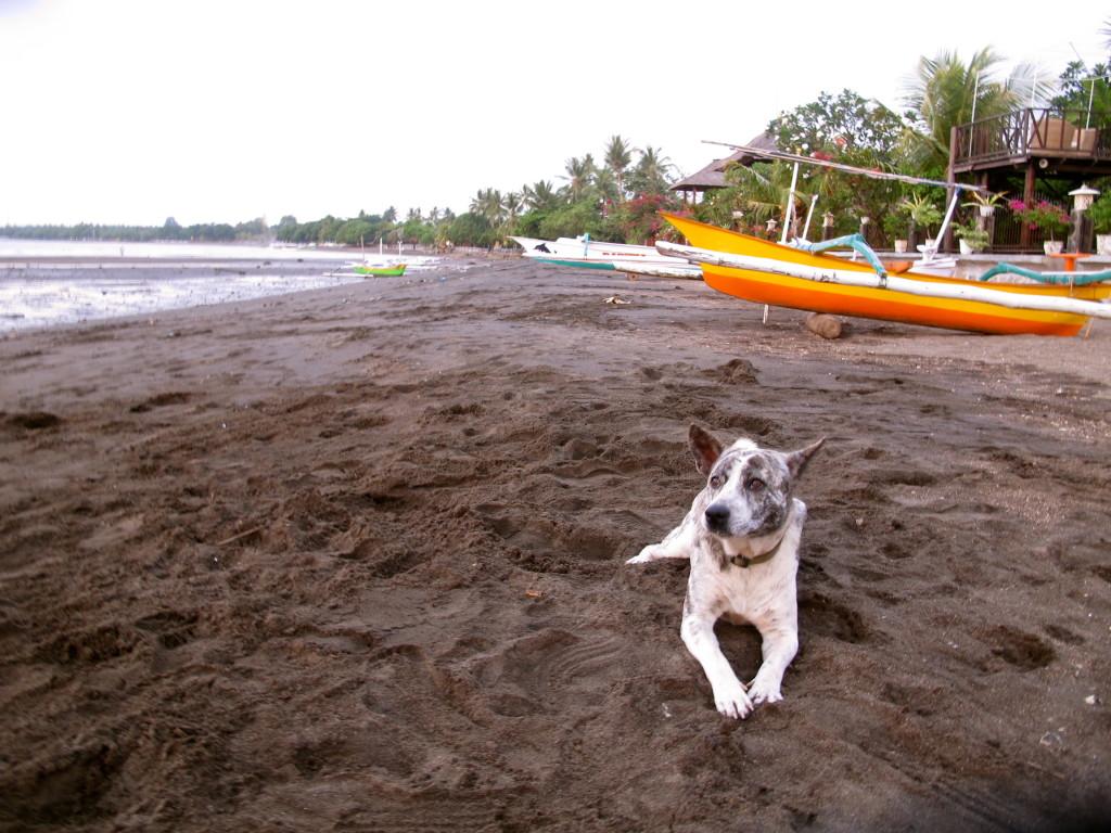 Lovina Dog