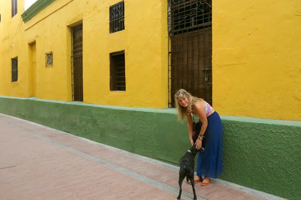 Santa Marta Dog