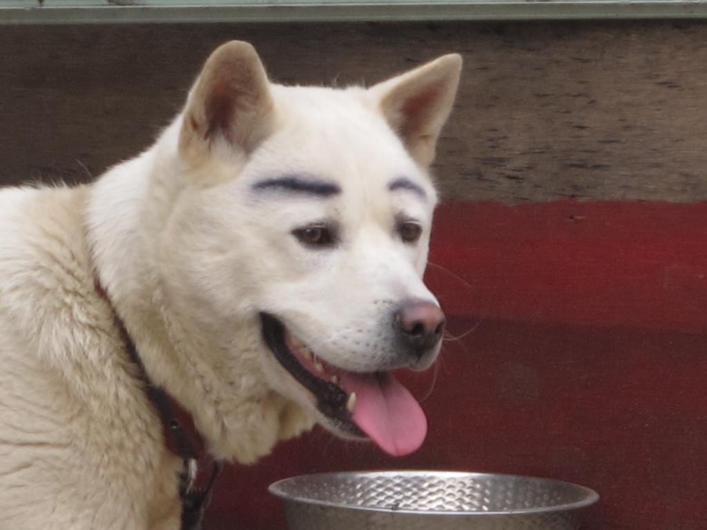 Seoul Dog