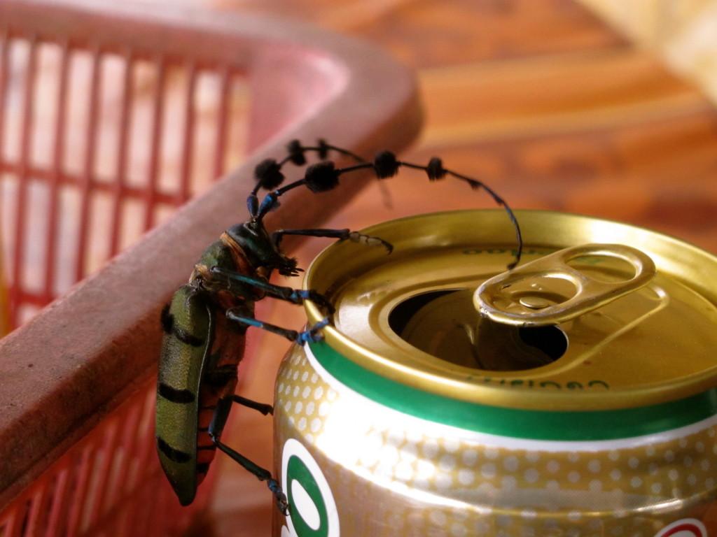 Bug in Laos
