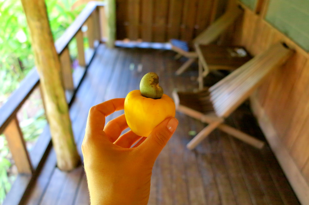 Belize Cashew Apple Fruit