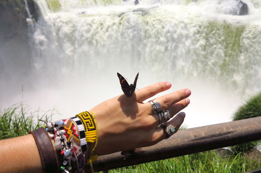 Argentina Butterfly