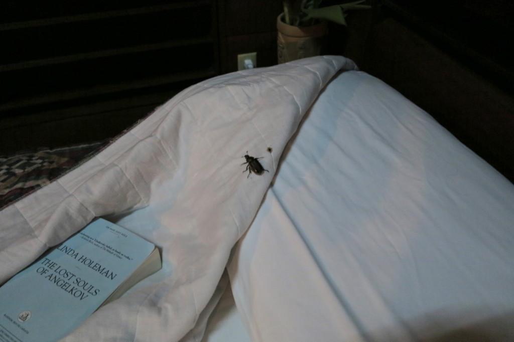 Belize Bug
