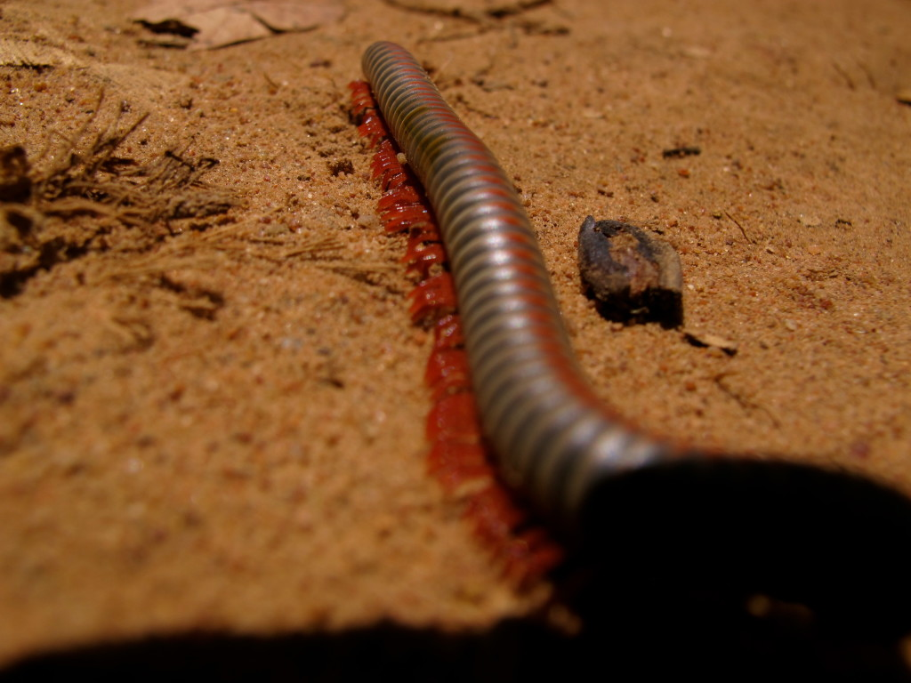 Cambodia bug