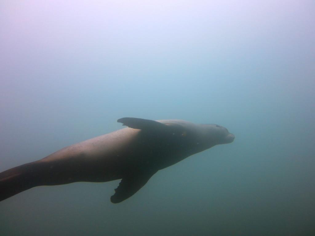 Galapagos Scuba Diving 1