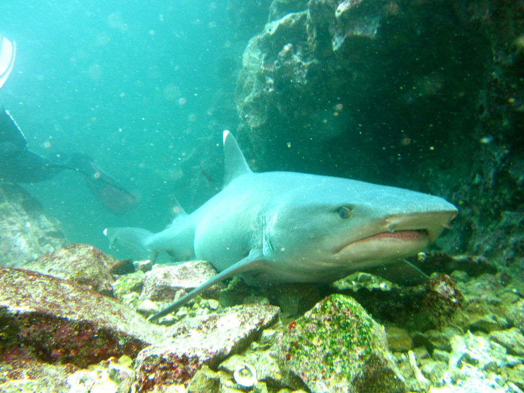 Galapagos Scuba Diving 3