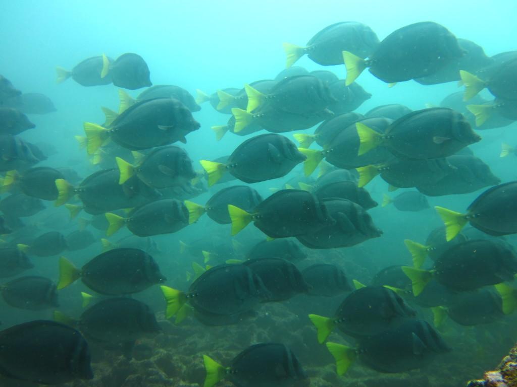 Galapagos Scuba Diving 5