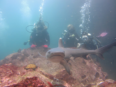 Galapagos Scuba Diving 6