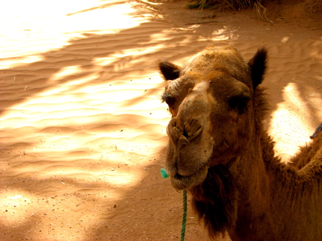 Sahara Morocco 5