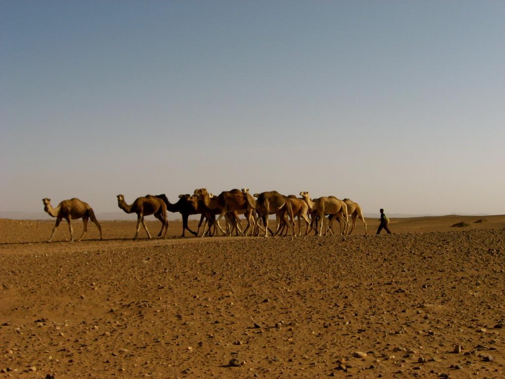 Sahara Morocco 7
