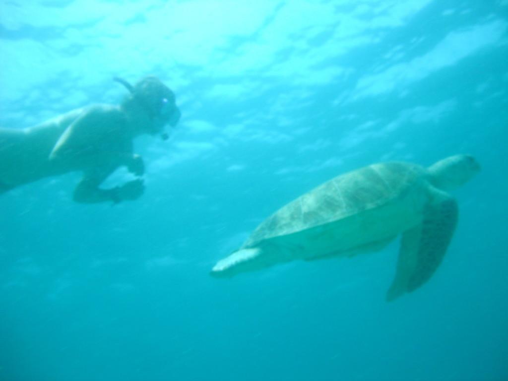 Turtle in Malaysia