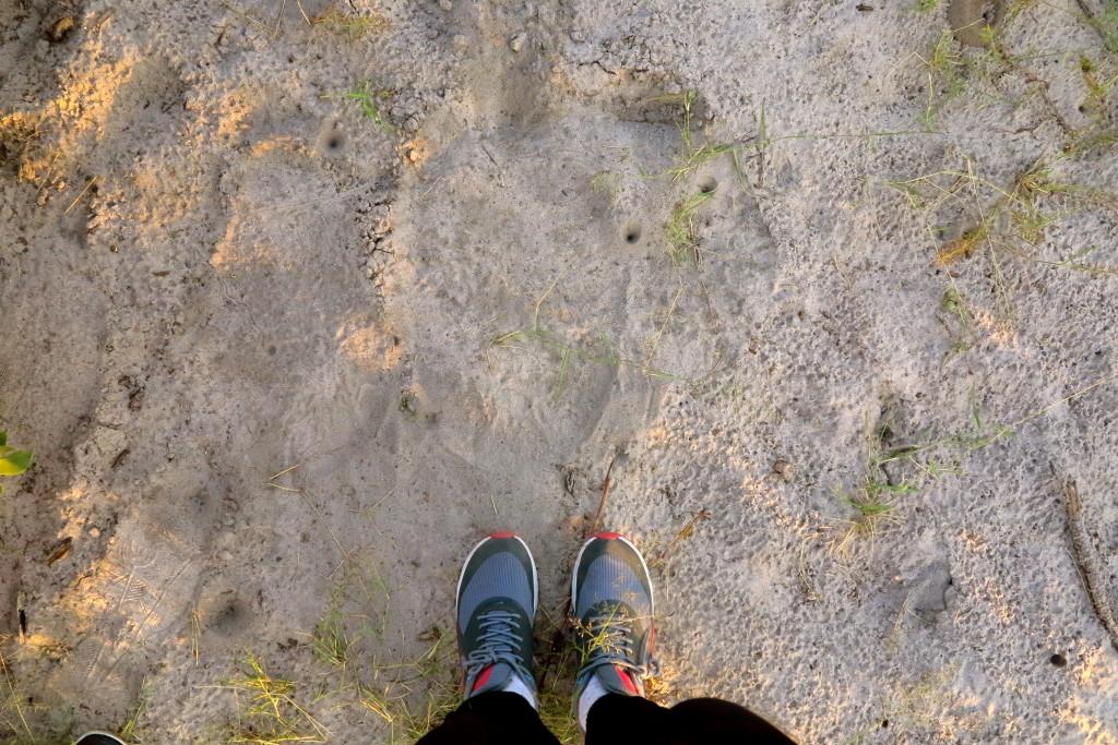Botswana Feet