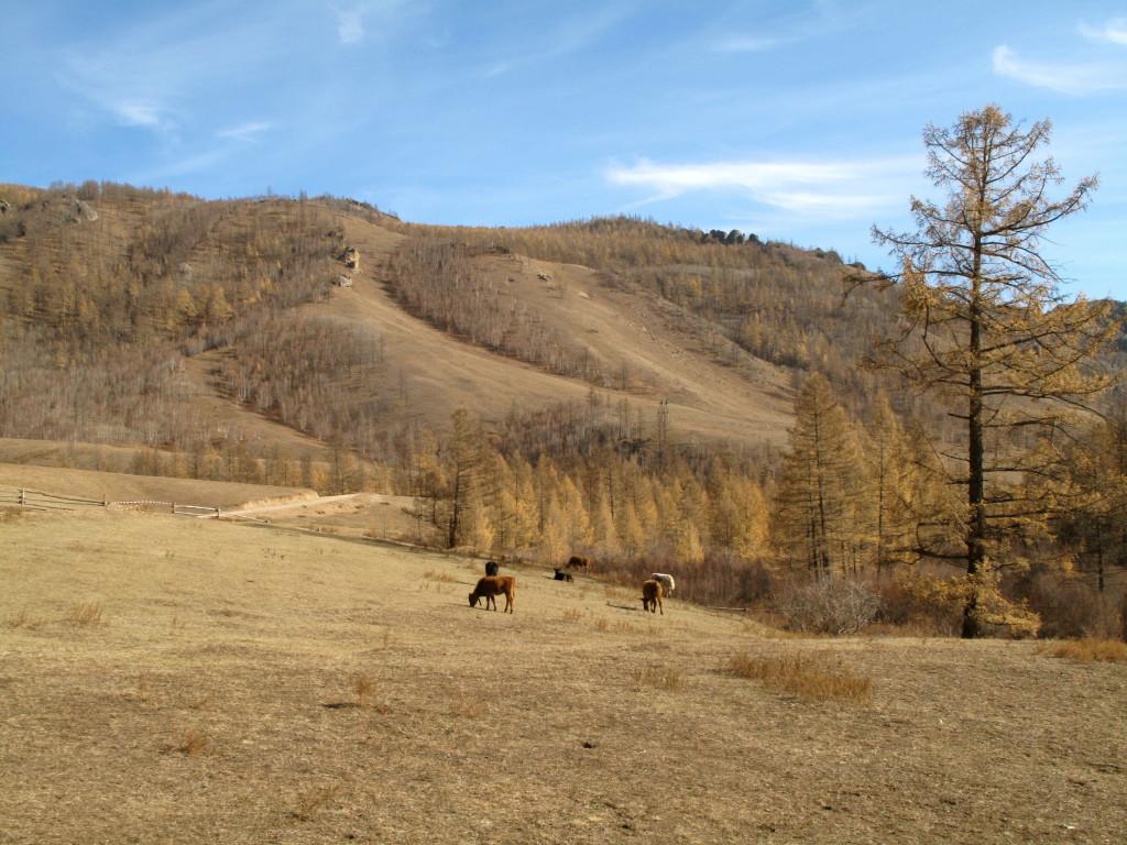 Mongolian Ger 9