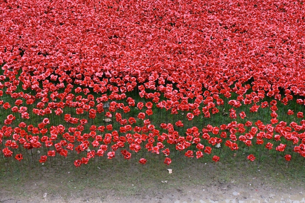 Tower of London Poppies 7
