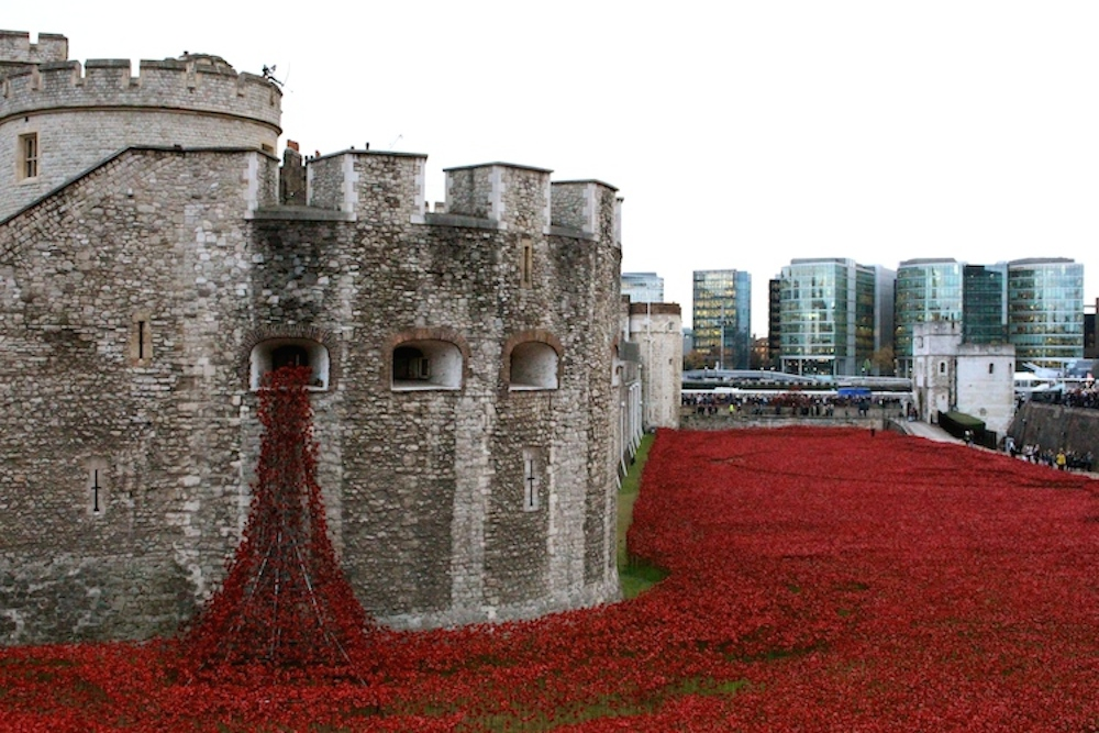Tower of London Poppies 8