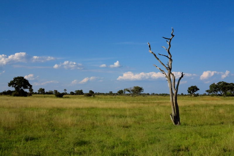 Botswana 22