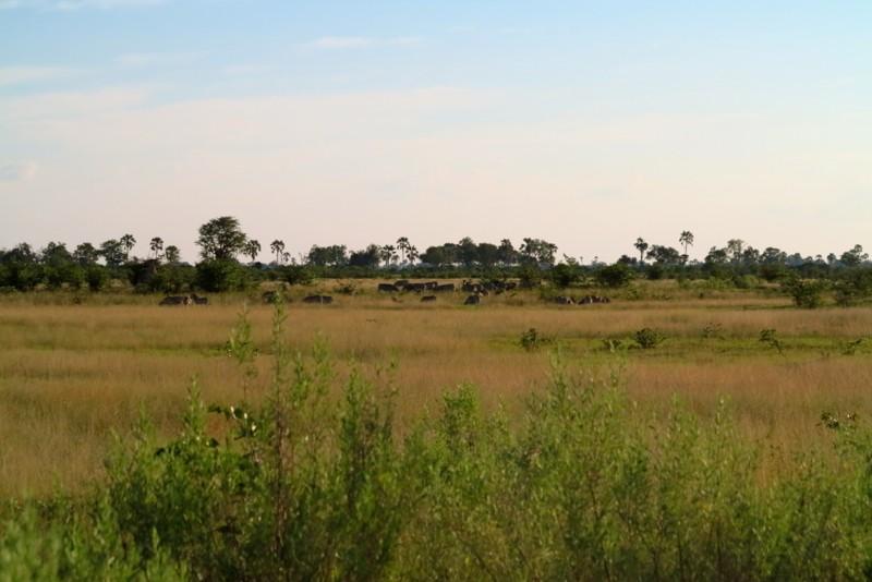 Botswana 24