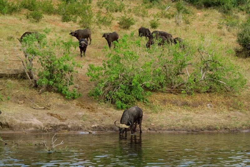 Botswana 39
