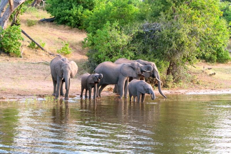 Botswana 45