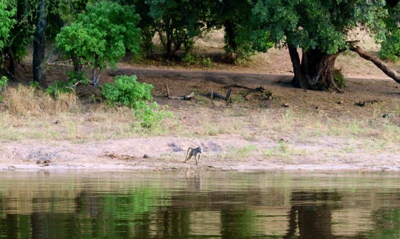 Botswana 46