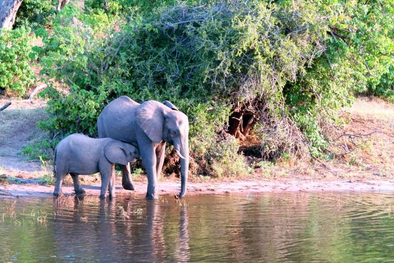 Botswana 49