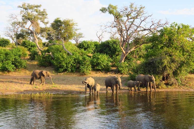 Botswana 50
