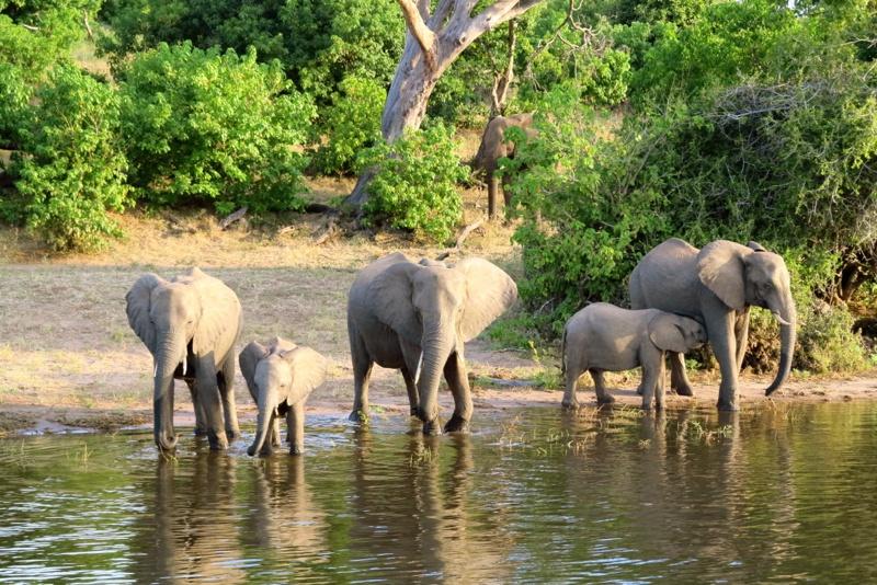 Botswana 51