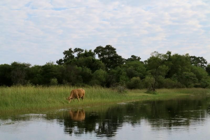 Botswana 8