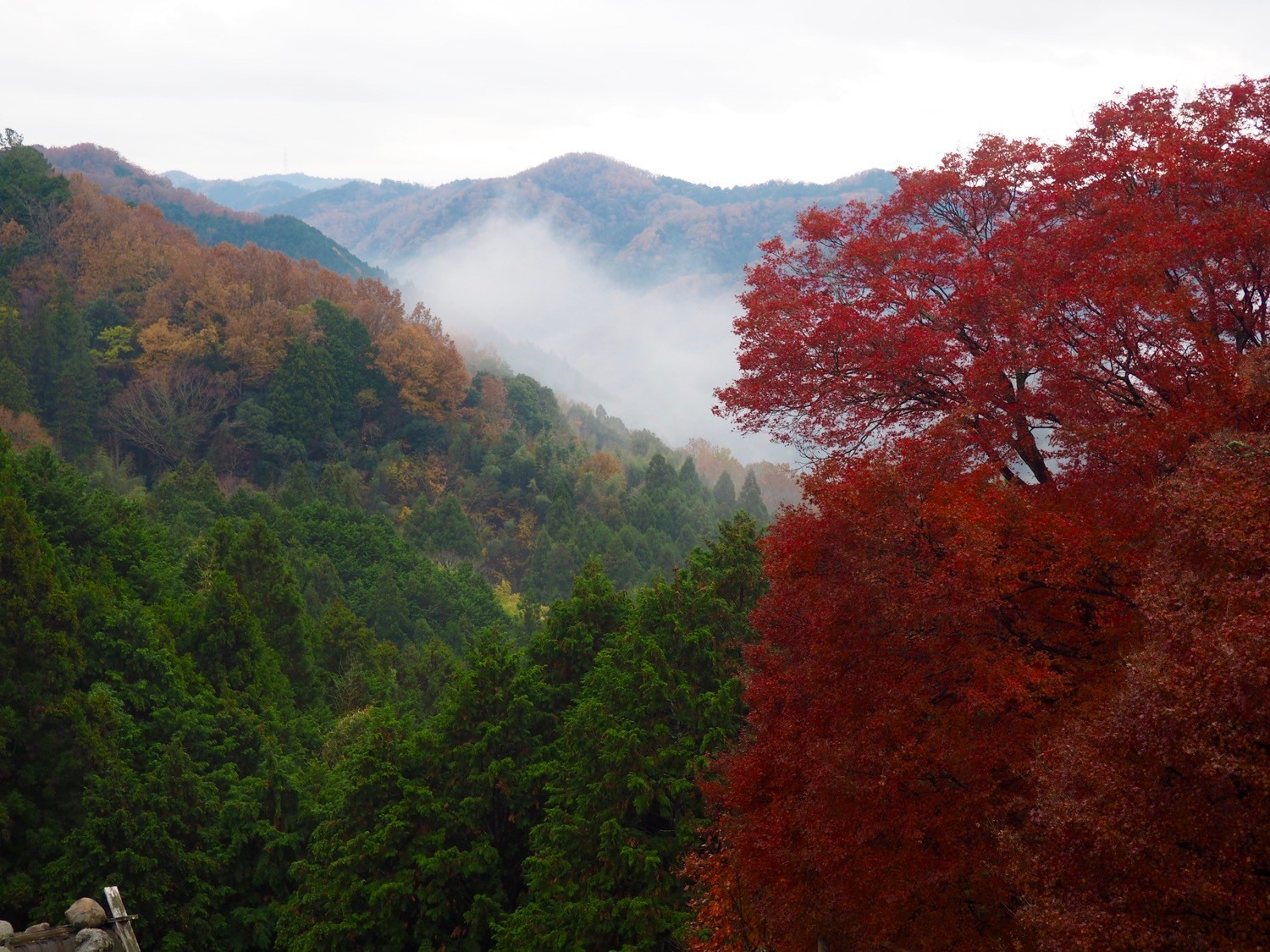 autumn leaves in Japan
