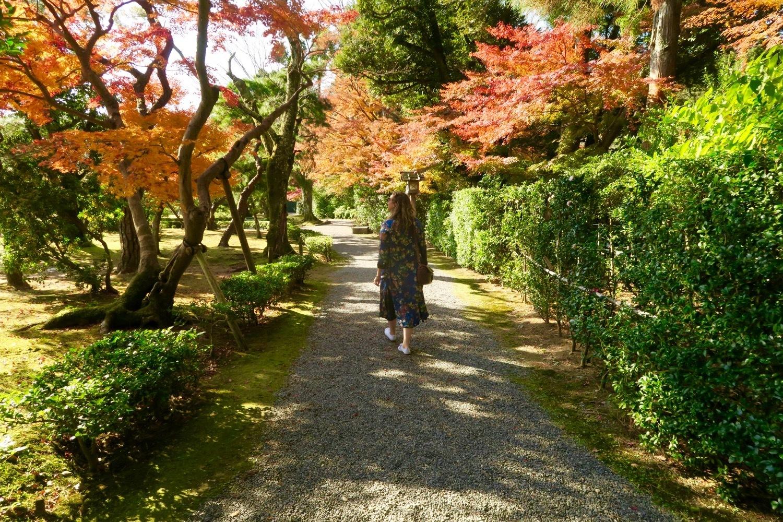 walking through Ise leaves